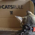 Novas Coleiras Para Gatos Zee.Cat