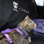 Testamos o uberPET, quer saber como foi?