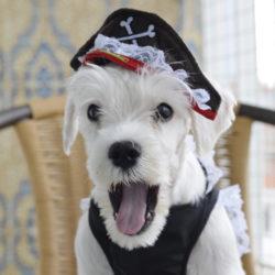 O incrível mundo do Halloween Pet e suas Fantasias