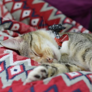 Sayuri, a especialista na arte da soneca