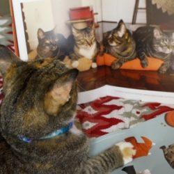 Lançamento do Livro: Cansei de ser gato: do capim ao sachê