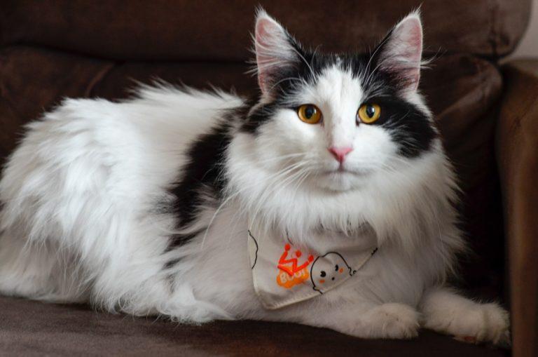 Estadão: A Agressividade dos Gatos