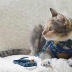 Evento Incrível da Petland: Amantes de Gatos