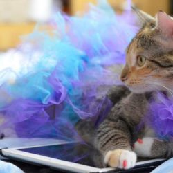 Feliz dia Mundial do Gato