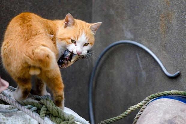 Conheça Aoshima, a Ilha dos Gatos