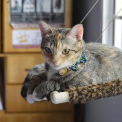 Camas de gato para Janela, sim ou sim?