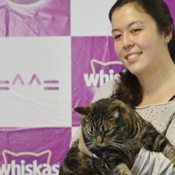 4 de Junho: Dia de Abraçar um Gato