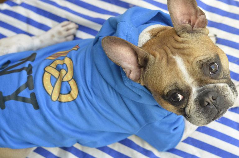Mais Cor, Mais Estilo e Mais Diversão no Mundo Pet