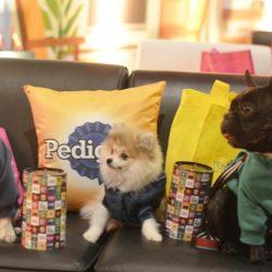 """A estreia mais esperada do ano """"Pets: A vida Secreta dos Bichos"""""""