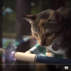 Petlove: Gatos arranhando os móveis, e agora?
