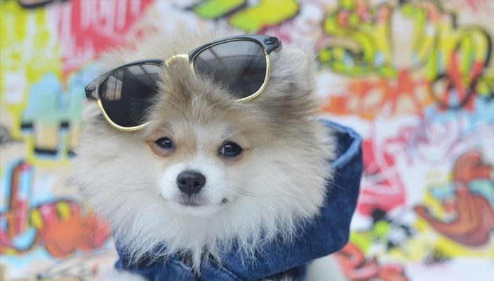 Auktoberfest vai agitar o mundo canino