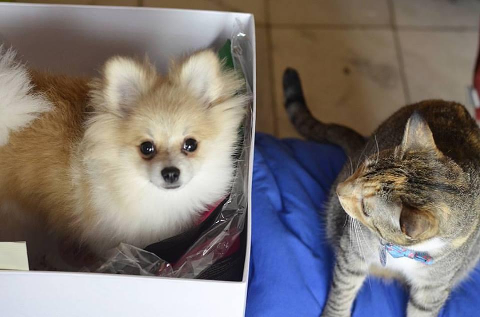 10 Momentos em que Provamos que Cães e Gatos podem se dar bem