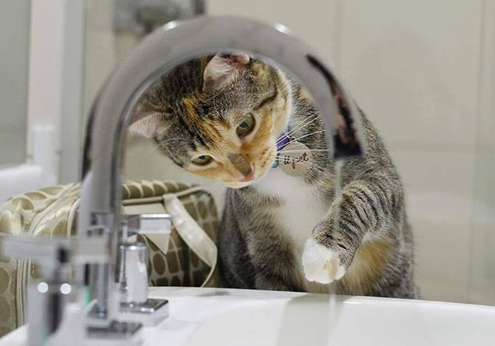5 dicas para o seu gato beber mais água