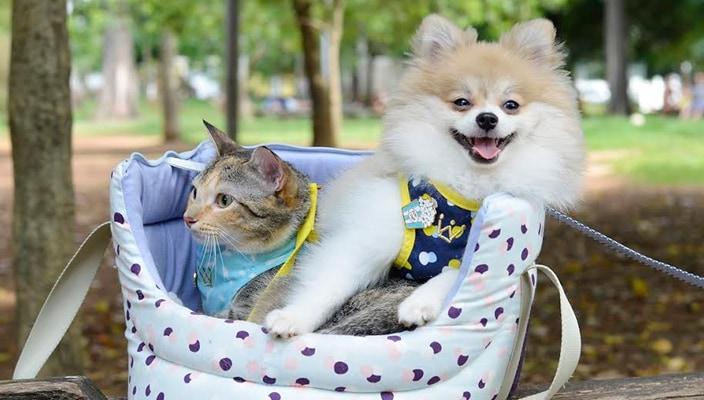 O dia em que eu levei o Boss e a Sayuri juntos ao Parque