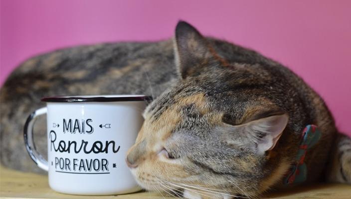 Comprinhas Cansei de Ser Gato