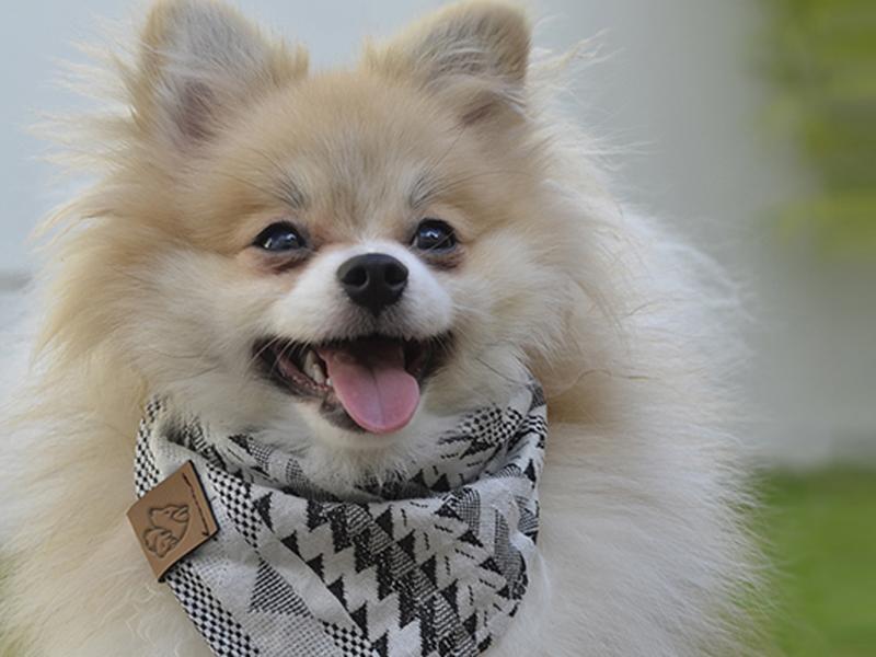 Conheça a Coleção Outono/Inverno da Cacau Dress Pet