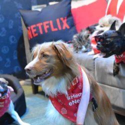 Meu Pet e Netflix: Maratonas e mais Maratonas de séries