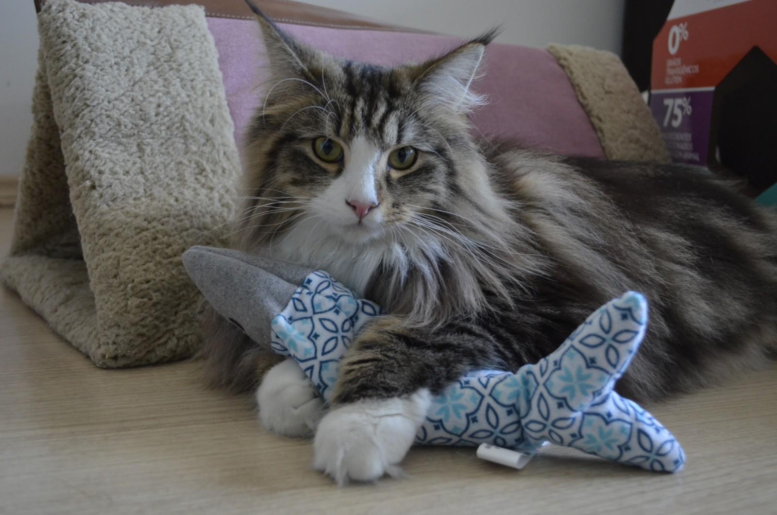 Brinquedos para Gatos e Catnip