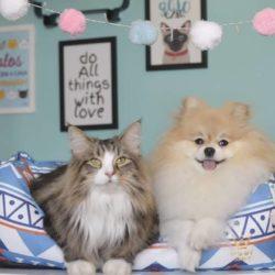 10 vezes em que nós Mostramos que Cães e Gatos não se dão bem