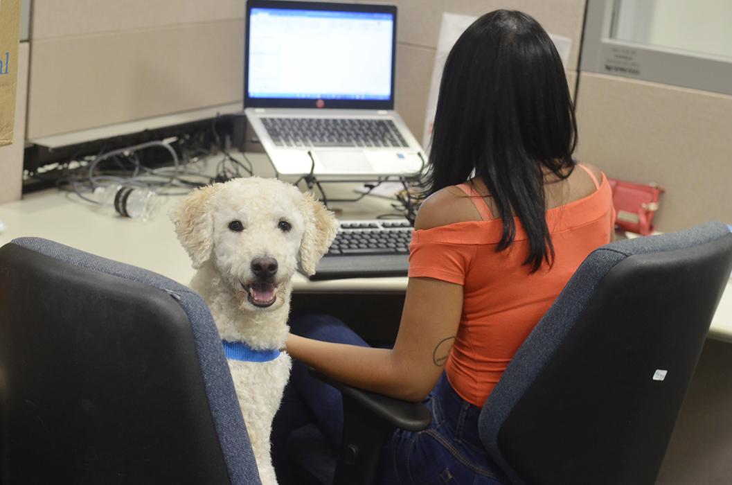 Pode levar cachorro pro trabalho? Conheça o Pets at Work